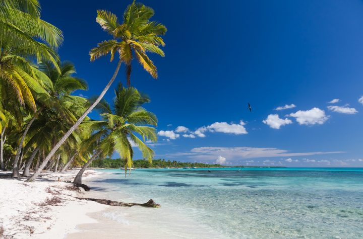 Coconut Palm trees on white sandy beach in Saona island, Dominican Republic